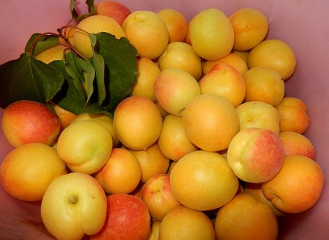 Apricots from Le petit jardin (1).jpg