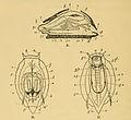 Archi-mollusc by Herdman.jpg