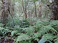 Askham Bogs diverse habitats (geograph 2061172).jpg