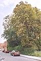Assenede Assenede Kasteelstraat - 248478 - onroerenderfgoed.jpg