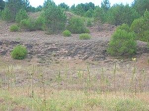 Astondo Gorliz dunas petrificadas 2007 08 07.jpg