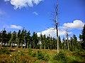 Auf der Königsheide 3 - panoramio.jpg