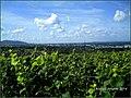 August Landscapes Rhine Valley - Master Rhine Valley Photography 2014 Freiburg im Breisgau - panoramio.jpg