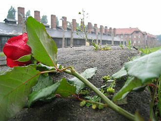 Hope - Auschwitz, a rose expressing hope