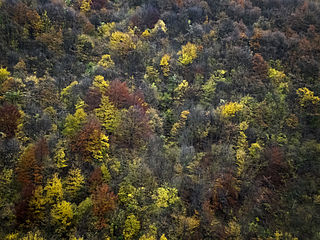 Autumn, Kucaj mountains