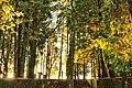 Autumn colors in Braga (24336299638).jpg