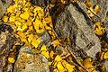 Autumn colours in SW Utah - lower Cedar Canyon road (15467749988).jpg