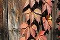 Autumn textures (265933239).jpg