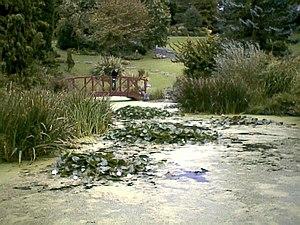Avenham Park - Avenham Park's Japanese garden