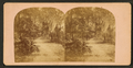 Avenue in Bonaventure, near Savannah, Georgia, from Robert N. Dennis collection of stereoscopic views.png