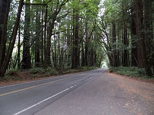 Avenue of the Giants - Avenue of the Giants passes through a redwood forest.