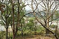 Bình An, Di An, Binh Duong, Vietnam - panoramio (16).jpg
