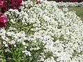 BCBG Flowers 07.JPG