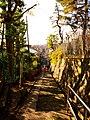 Backs - panoramio.jpg