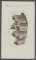 Balanus tintinnabuliformis - - Print - Iconographia Zoologica - Special Collections University of Amsterdam - UBAINV0274 101 02 0005.tif