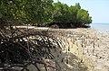 Bali Barat mangroves.jpg