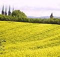 Bamberger Dom hinter Rapsfeld - panoramio.jpg