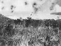 Bantam Under Attack-28 March 1943.png