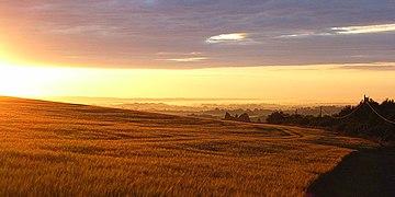 Barley above Thruxton - geograph.org.uk - 483989.jpg