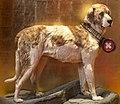 Barry der Rettungshund Part.jpg