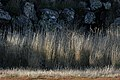 Basalt and Grass (33469073584).jpg
