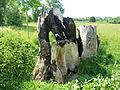 Baumstumpf in der Westhovener Aue.JPG