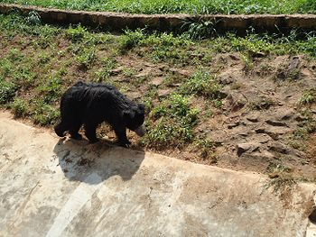 Bear Aikla Chalo Re.jpg