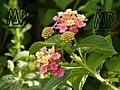 Beautiful flowers from Rwanda the country of thousand hills.jpg