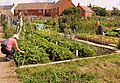 Beech Road allotments - geograph.org.uk - 1600779.jpg
