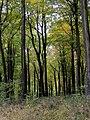 Beech Woods - Rag Copse - Nov 2012 - panoramio.jpg