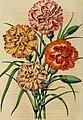 Belgique horticole (19743196213).jpg