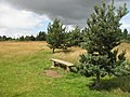Bench, Lyth Hill - geograph.org.uk - 1614172.jpg