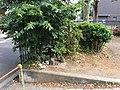 Benchmark No. 116B in Kawasaki, Japan IMG 0050.jpg