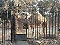 Benghazi Zoo10.JPG