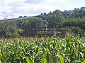 Bickleigh , Footbridge at the Maize Maze - geograph.org.uk - 1224840.jpg