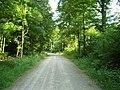Bildhäuser Wald - panoramio.jpg