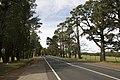 Bilpin NSW 2758, Australia - panoramio (4).jpg