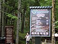Biogradska gora - National Park, the oldest protected natural resource in Montenegro 17.jpg