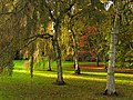 Birches and Acers at Westonbirt - geograph.org.uk - 69642.jpg