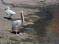 Birds Garden of Isfahan (43).jpg