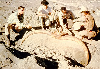 Idaho Museum of Natural History - Paleontologist Marie Hopkins and crew excavating a bison latifrons