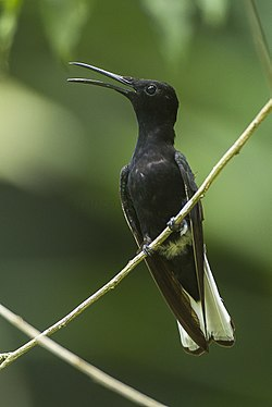 Black Jacobin - REGUA - Brazil S4E2449 (12901714864).jpg