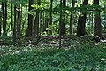 Black squirrel distant 3 (f187090f-58d3-40fa-a564-620a8bf4253f).JPG