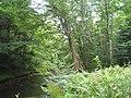 Bloomfield Provincial Park IMG 8237 (1848214673).jpg