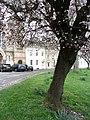 Blossom in Tetbury - March 2012 - panoramio.jpg