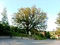 Bojkovice, Bojkovský dub nad kostelem.jpg