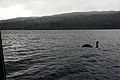 Bootsfahrt Loch Ness ab Fort Augustus (37899893734).jpg