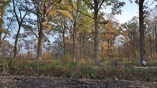 Bos Haanwijk Noord Brabant