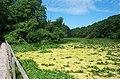 Bosherton Lily Ponds - geograph.org.uk - 14024.jpg
