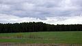 Bosque de Turingia en Ilmenau.jpg